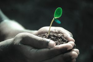 The foundation of a healthy life, part 3: a healthy way of growing