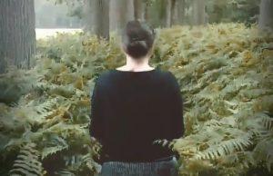 fern forest walk